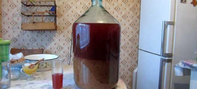 Приготовление сливовой браги для отличного домашнего самогона