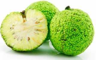 Как из Адамова яблока (маклюры) приготовить лечебную спиртовую настойку