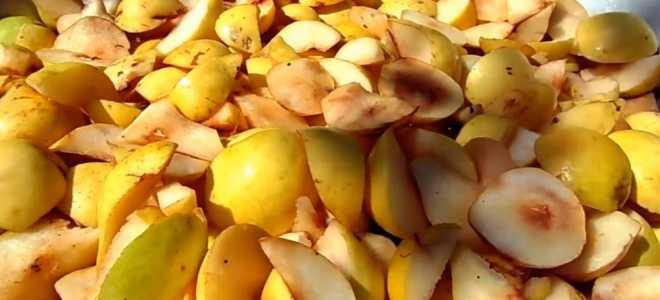 Как из груш сделать брагу для вкусного и ароматного самогона