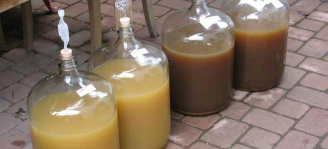 Какое бывает сусло для самогона и как его сделать в домашних условиях